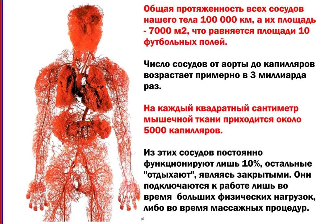 Как проверить сосуды всего тела